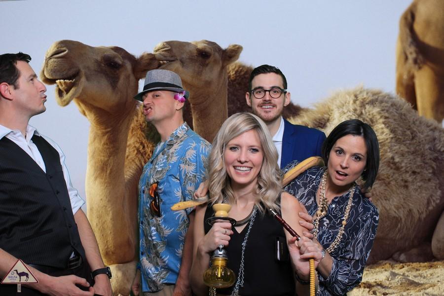 Prenez une photo avec un chameau sans aucun risque